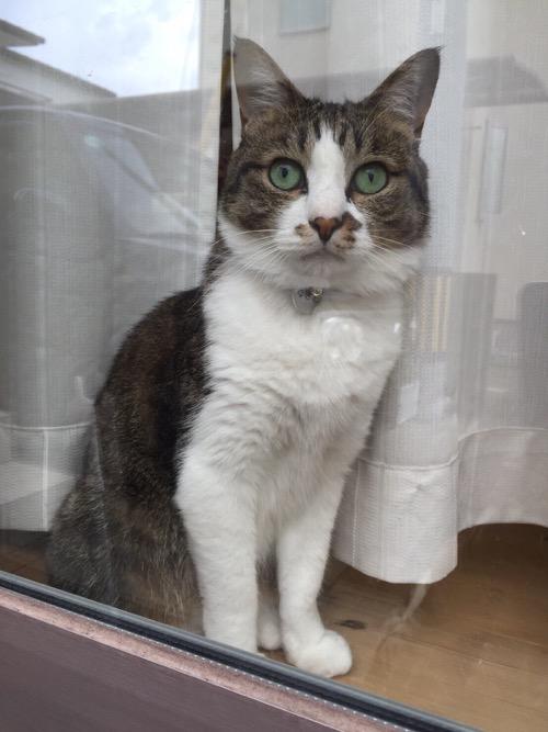 ガラス戸から外を眺めるギョロ目の猫-ゆきお
