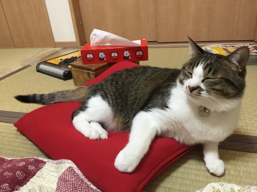 MOGUの赤いビーズクッションに座り、目を細めてくつろぐ猫-ゆきお