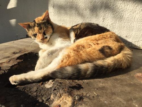 日当たりの良い壁際で頭を上げたまま眠る茶色い桜田公園の猫