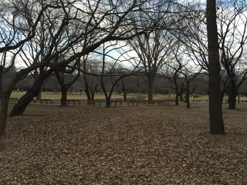 冬の代々木公園の風景-落ち葉で覆われた美しい地面