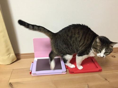 チャレンジタッチの画面とチャレンジタッチの新旧カバーを踏みつける猫ーゆきお