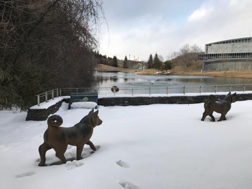 宮城大学キャンパス内の雪原を歩く犬たちと池