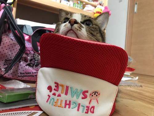 ひっくり返ったキャップの中から可愛らしい顔をのぞかせる猫-ゆきお