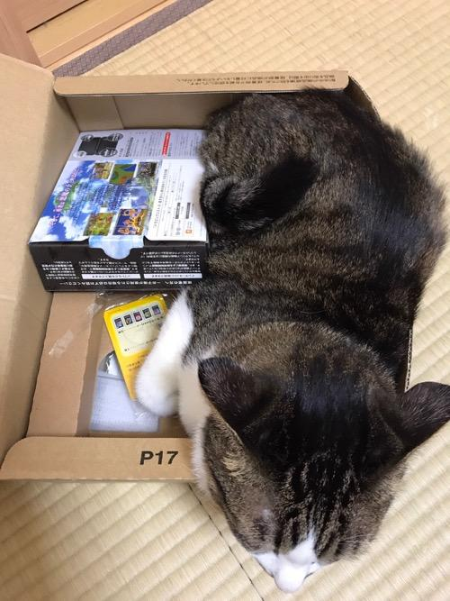 ドラクエ11と2DSのセット箱と並んでamazonの箱の中に入る猫-ゆきお