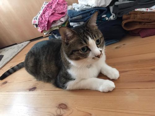 床に置かれた洗濯物の隣で座る猫-ゆきお