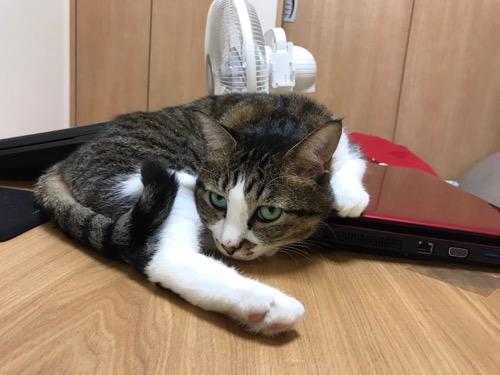 赤いダイナブックに左手を置いて鋭い視線を送ってくる猫-ゆきお