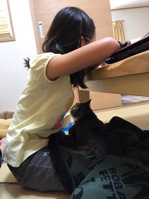 小学六年生の娘の膝上でブランケットに包まれる猫-ゆきお(後ろ姿)