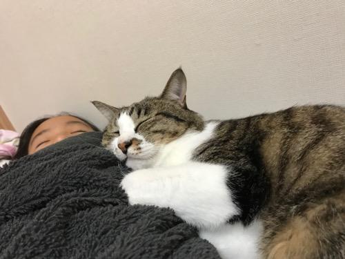 小学六年生の娘に添い寝する猫-ゆきお(娘のお腹の上で幸せそうな寝顔)