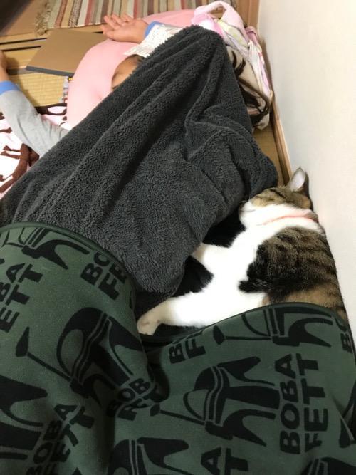 小学六年生の娘に添い寝する猫-ゆきお(横寝)