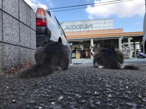 Aコープとべ店を眺める野良猫2匹の後ろ姿