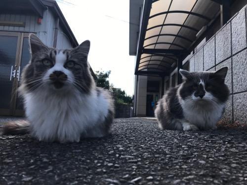 Aコープとべ店を眺める野良猫2匹の顔