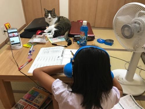 ドラゴンクエスト スライムヘッドフォンで音楽を聴きながら勉強する娘とテーブルの上のノートPCにもたれながら娘を見つめる猫-ゆきお