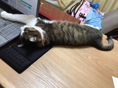 ノートPC・SONY VAIOのキーボードを右前脚で覆って触らせまいとする猫-ゆきお(背後から見た様子)