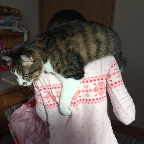 飼い主の娘(10歳女子)の首に巻きつく猫-ゆきお