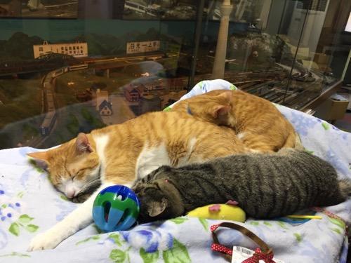 東京都江戸川区の銭湯・友の湯の飼い猫3匹