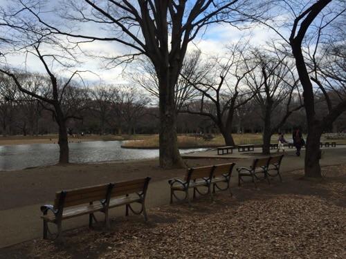 冬の代々木公園の風景-落ち葉で覆われた美しい地面の背後に並ぶ3つのベンチと「大きな噴水のある池」