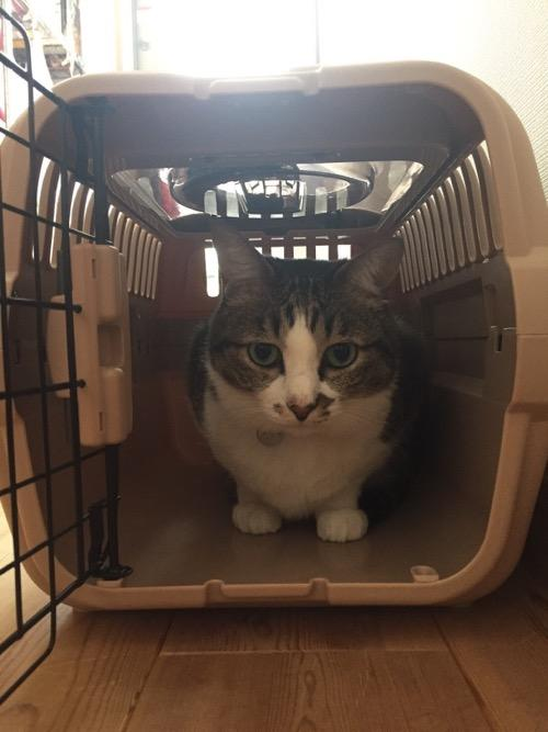 扉の開いたケージから出てこない猫-ゆきお