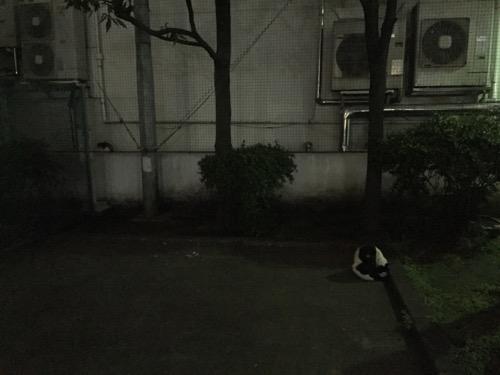 夜の桜田公園の猫2匹