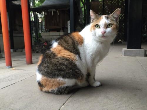 愛宕神社境内にいた猫(ややこちらを向いている)
