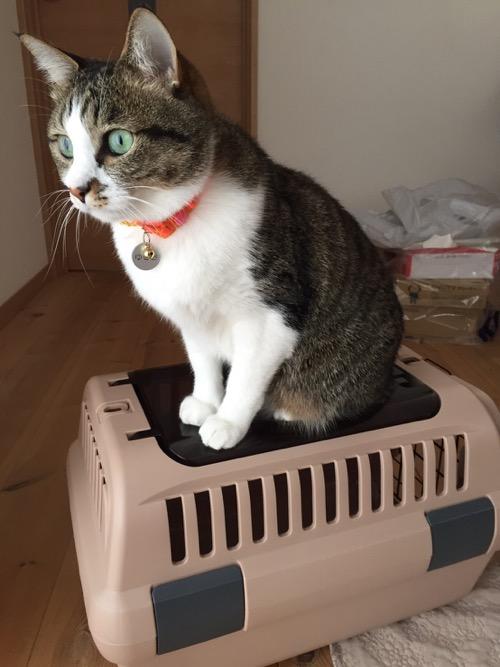 キャリーケースの上で茫然自失状態にあるように見える猫-ゆきお