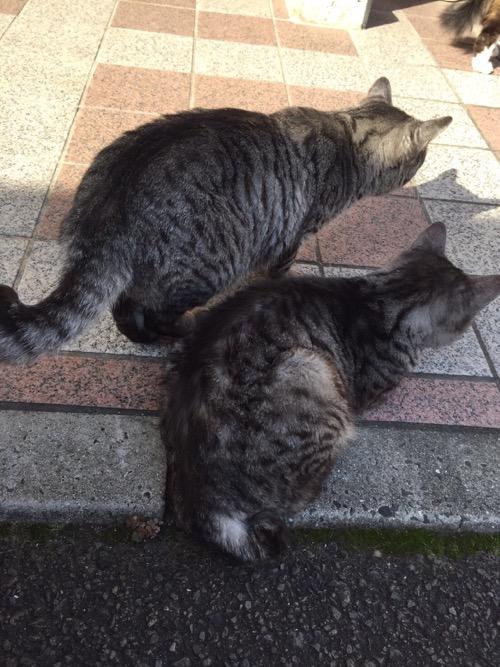 平成28年秋の砥部焼き祭りの会場にいた仲の良さそうな2匹の野良猫達