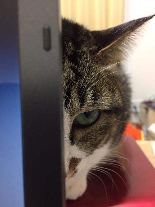 SONY時代の古いノートパソコンVAIOの液晶画面の裏から半顔で睨んでくる猫-ゆきお