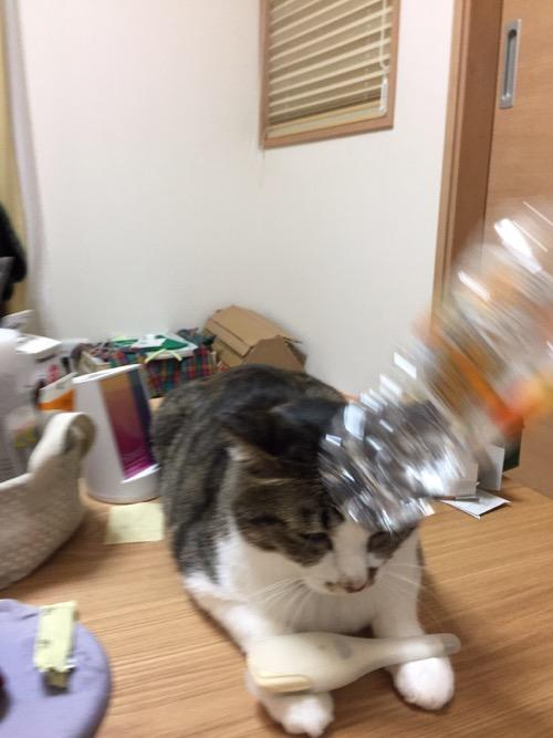 いろはすをぶん投げる猫-ゆきお