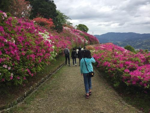 冨士山公園の赤やピンクの色鮮やかなつつじの花に囲まれた道を歩く娘