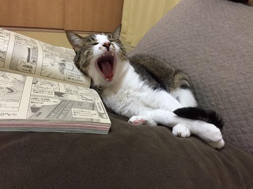 見開きジャンプを枕にした後で大あくびをする猫-ゆきお