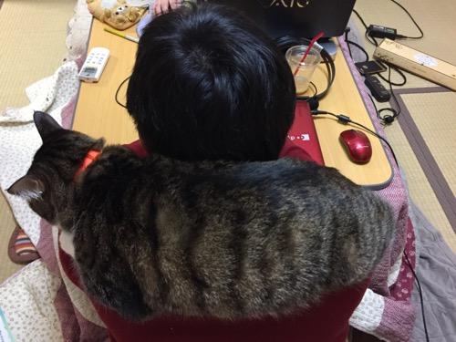 コタツに入る飼い主の肩の上でマフラーになる猫-ゆきお
