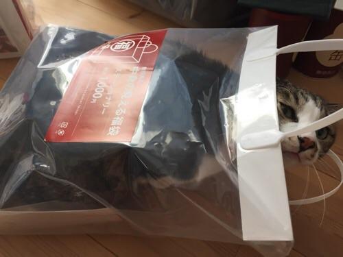 無印良品の2016年の福袋「中身の見える福袋 ステーショナリー 税込み1000円」の袋の中に入りこちらを見つめる猫-ゆきお