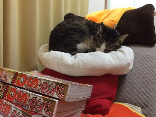スヌーピーのクッションの上で丸くなる猫-ゆきお
