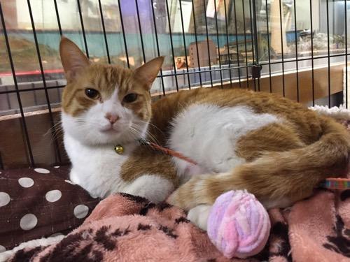 東京都江戸川区の銭湯・友の湯の飼い猫1匹