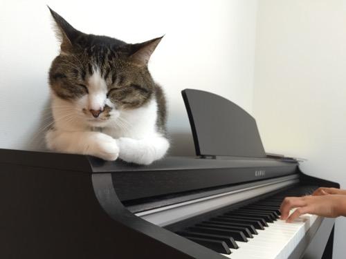 小学五年生の娘が練習するKAWAIの電子ピアノの上に座り、目を閉じる猫-ゆきお