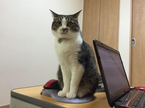 マウスパッドに座る猫-ゆきお