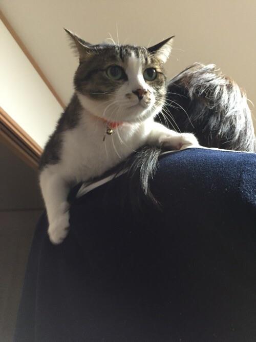 妻の首に巻きつこうとするマフラー猫ーゆきお