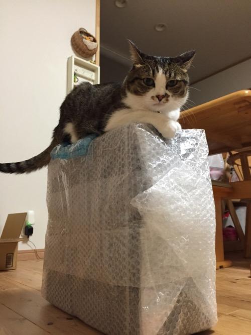 修理から戻ってきたデスクトップPCの筐体の上に座る猫-ゆきお