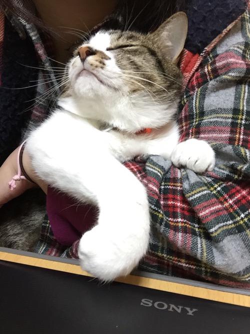 妻の腕の中で手をくねらせて眠る猫-ゆきお