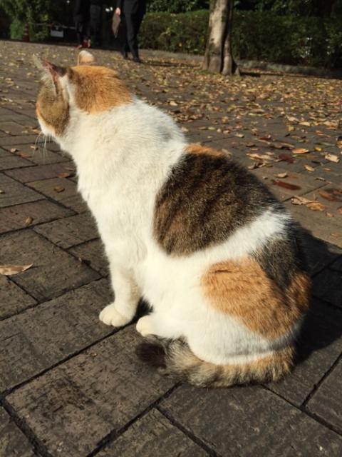 愛宕神社の猫を見に行ったー三毛猫と白猫に会えた