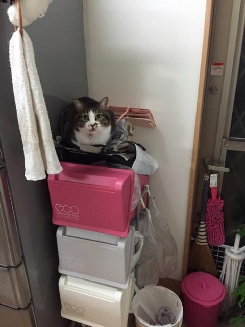 冷蔵庫の横のゴミ箱の上で鳴く猫ーゆきお