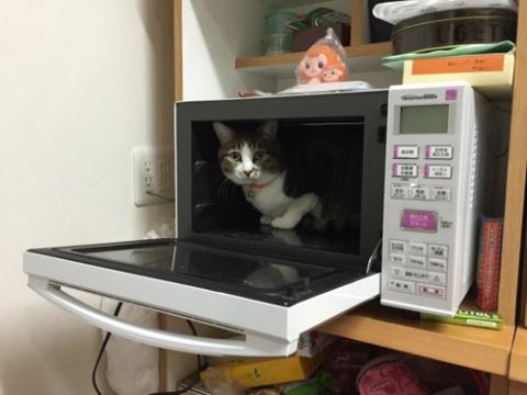 電子レンジの中から見つめる猫-ゆきお