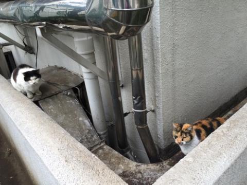 近づいてキスするように臭い合う猫達-桜田公園にて