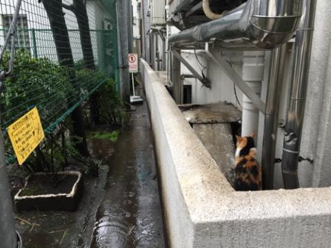 雨の中、背中を向けている猫-桜田公園にて