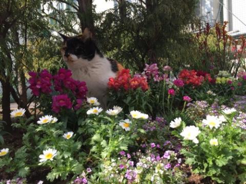 桜田公園のお花畑の中で神妙な顔で用をたす猫