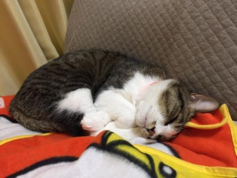頭を横にして眠り、撫でると寝姿が変わる猫-ゆきお