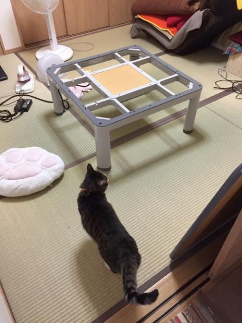 こたつ布団とお別れする猫-ゆきお