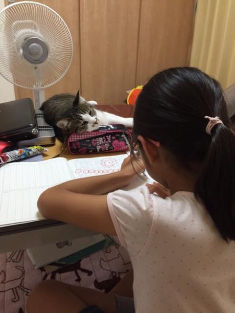 コタツで勉強をする小学五年生の娘を監視する猫-ゆきお