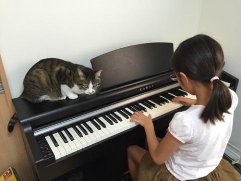 小学五年生の娘が練習するKAWAIの電子ピアノの上でくつろぐ猫-ゆきお