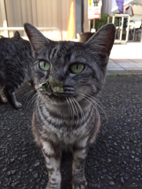 平成28年秋の砥部焼き祭りの会場にいた野良猫達