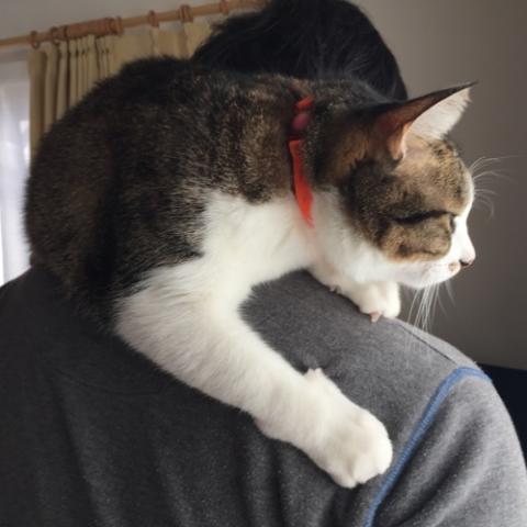 39歳男の首では無反応なのに10歳女子の首には興奮する猫-ゆきお